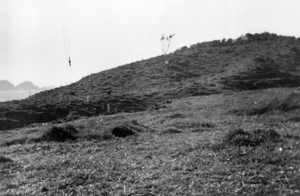 Raoul Island Radio, April 1950: 'Looking east from Pole C, showing where new poles could be placed (bull paddock)'.
