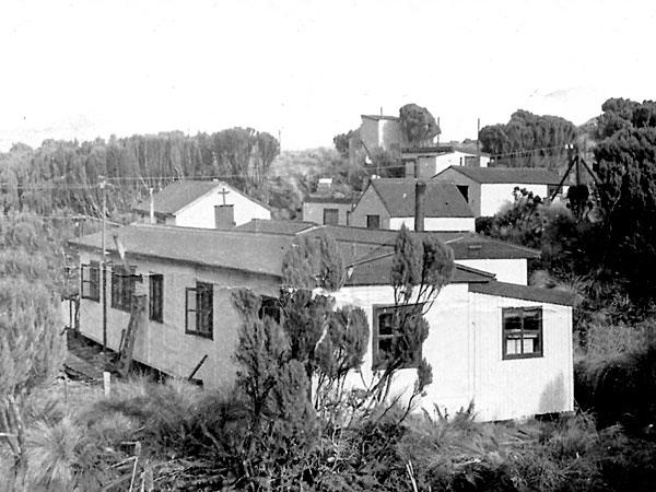 Campbell Island, 1951
