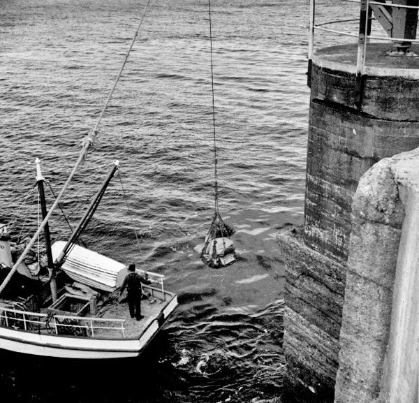 Wash from the propeller of Enterprise as cargo is transferred at Stephens Island Lighthouse
