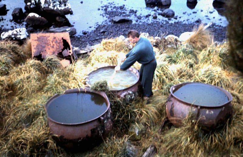 Whaling pots abandoned at Campbell Island